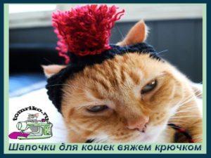Шапочки для кошек вяжем крючком